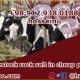 price of rock salt for livestock