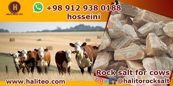 Salt bricks for cattle