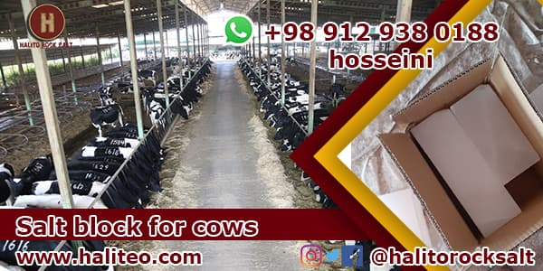 cow salt block